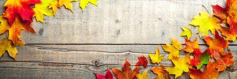 Leaves In Autumn Banner royalty free stock photo