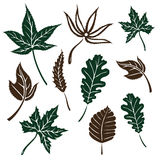 Leaves, autumn Royalty Free Stock Image