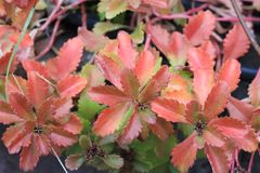 Leaves in autumn colors closeup stock photography