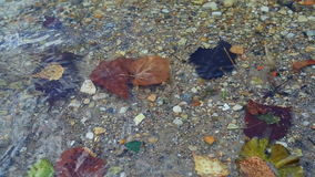 Leaves at the autumn drifting under water. Closeup of leaves at the autumn drifting under water stock video footage