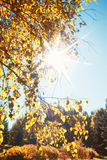 Leaves of autumn flare Royalty Free Stock Photography