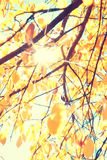 Leaves of autumn flare Royalty Free Stock Images