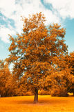 Leaves of autumn flare tree Stock Images