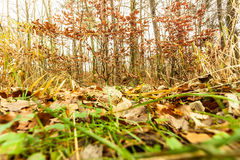 Leaves in autumn on forest ground Royalty Free Stock Photo