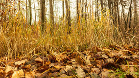 Leaves in autumn on forest ground Royalty Free Stock Photos