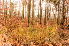 Leaves in autumn on forest ground Stock Image