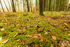 Leaves in autumn on forest ground Royalty Free Stock Photography