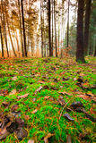 Leaves in autumn on forest ground Royalty Free Stock Image