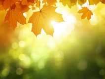 Leaves in autumn forest royalty free stock photography