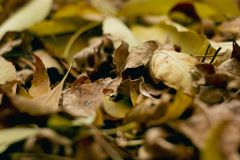 Leaves in the autumn forest royalty free stock image