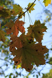 Leaves in autumn forest Stock Image