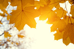 Leaves in autumn forest Royalty Free Stock Photos
