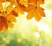 Leaves in autumn forest Stock Images