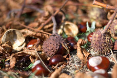 Leaves and autumn fruits Stock Photography