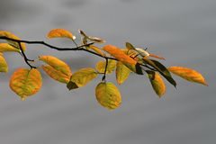 Leaves in autumn, Germany Royalty Free Stock Photography