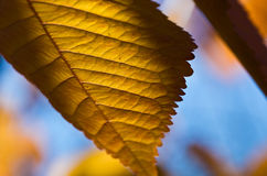 The Leaves of Autumn Stock Images