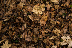 Leaves. Autumn leaves on the ground Stock Photography