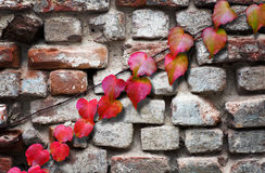 Leaves in autumn Royalty Free Stock Image