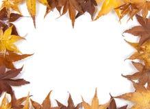 Leaves. Autumn leaf border on a white background Stock Image