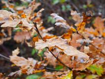 Leaves. Autumn leafe color Royalty Free Stock Photos