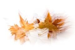 Leaves in autumn Stock Image
