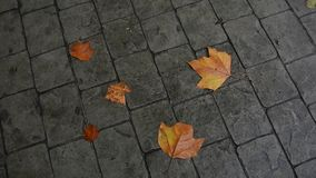 Leaves in autumn stock footage
