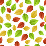 Leaves autumn Royalty Free Stock Images