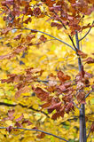 Leaves from autumn season Stock Photo