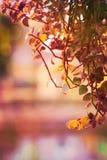 Leaves in autumn season Stock Photos