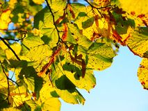 Leaves, Autumn, Sunny, Colorful Royalty Free Stock Photography