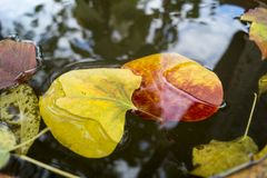 Leaves on the water Stock Image