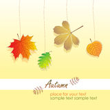 Leaves of Autumn, vector illustration Stock Photos