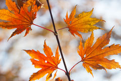 Leaves in the autumn wood Royalty Free Stock Images