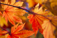 Leaves in the autumn wood Royalty Free Stock Photo