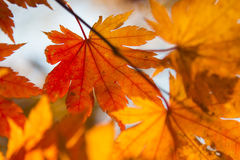 Leaves in the autumn wood Royalty Free Stock Photos