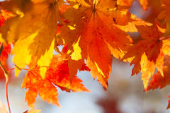 Leaves in the autumn wood Royalty Free Stock Photography