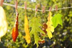 Leaves av olika färger ställde upp på en rad Royaltyfri Bild