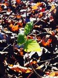 Leaves av treen Arkivfoto