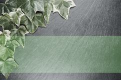 Leaves backdrop. Wet green ivy leaves on a dark stone surface - top view Stock Photo