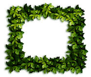 Leaves background. The ornament. Green laurel Leaves background Royalty Free Stock Photos