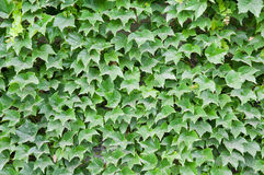 Leaves Background Stock Photo