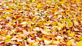 Leaves background Stock Images
