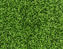 Leaves background. A bed of green leaves seen from a top view Stock Photography