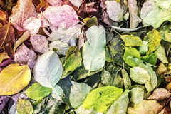 Leaves Background. Colorful Autumn Leaves - Abstract Background stock image