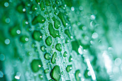 Leaves background with droplets. Leaves background - green leaves super close up with droplets Stock Photo