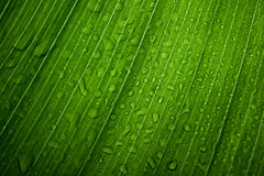 Leaves background with droplets Stock Images
