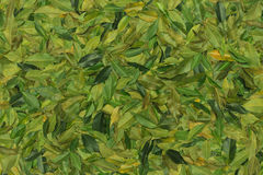 Leaves background royalty free stock images