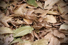 Leaves. Background of green and brown leaves Royalty Free Stock Photo