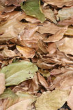Leaves. Background of green and brown leaves Royalty Free Stock Photos