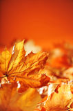 Leaves background Stock Photos